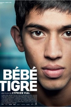 Bébé Tigre (2014)